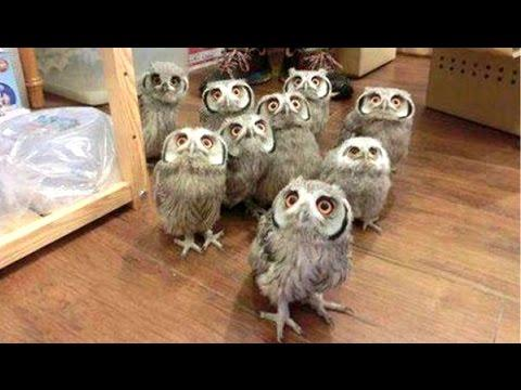 Owl - A Funny Owls And Cute Owls Compilation