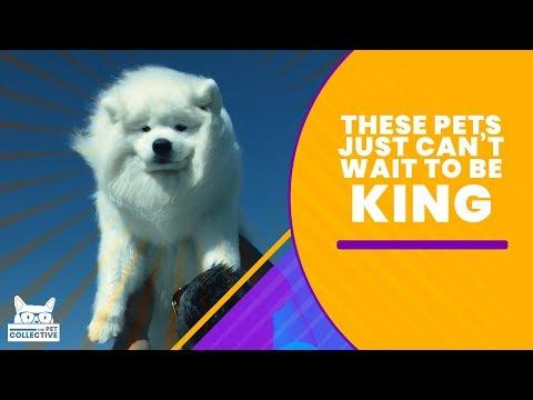 These Pets Just Can't Wait To Be King  | The Pet Collective