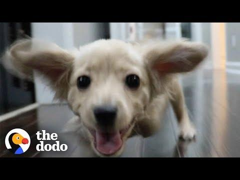 Gracie the Two-Legged Dog Gets a Wheelchair Made of LEGOs | The Dodo