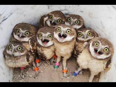 Funny Owls And Cute Owl Videos Compilation