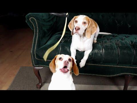 Dogs Vs. Pasta: Funny Dogs Maymo & Penny