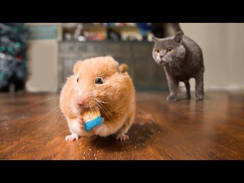 Mouse Hunt. AaronsAnimals Video