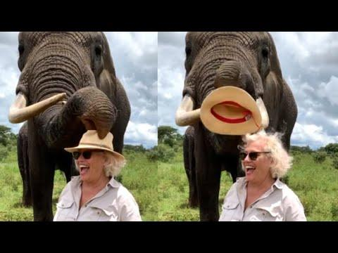 Elephant Steals Hat And Eats It Video.