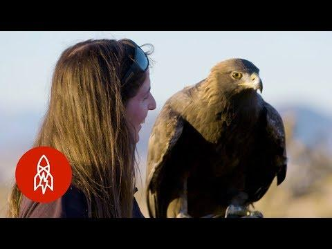 The Female Falconers Rewriting Tradition
