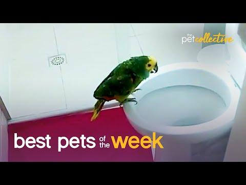 The World's Most Talented Bird? #Video | Best Pets of the Week