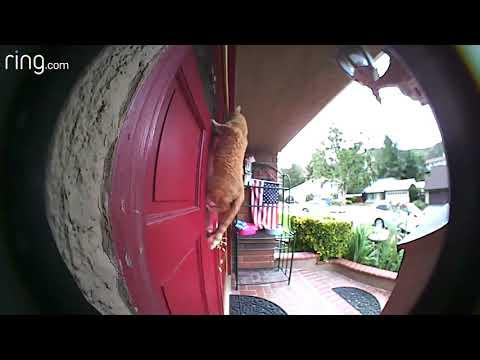 Ring Video Doorbell Most Viewed Videos