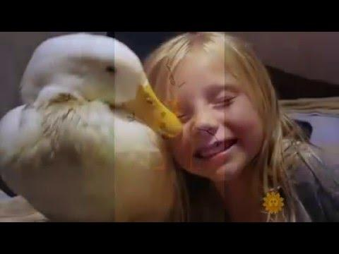 Little Girl From Maine Thinks She Is This Ducks Mother