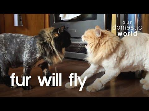 Let The Fur Fly Video | Our Domestic World