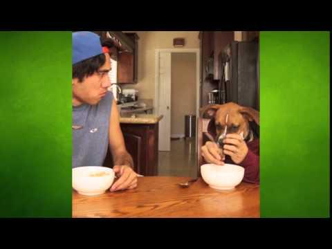 Indy The Dog Eats Cereal