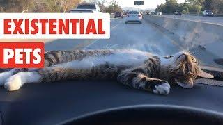 Existential Pets   Funny Pet Video Compilation 2017