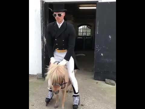Man On Rollerblades Rides Miniature Horse