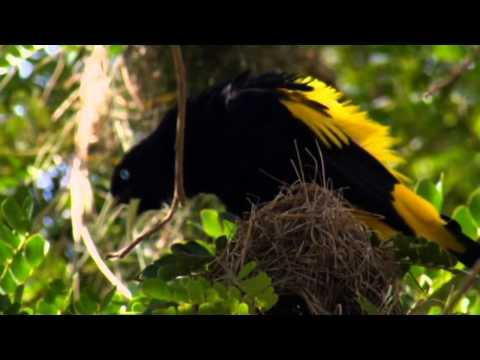 NAT GEO WILD HD (LIVING MUSIC ACTION)