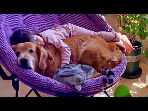 Sweet Golden Retriever & Cat Keeps their Little Human Safe #Video
