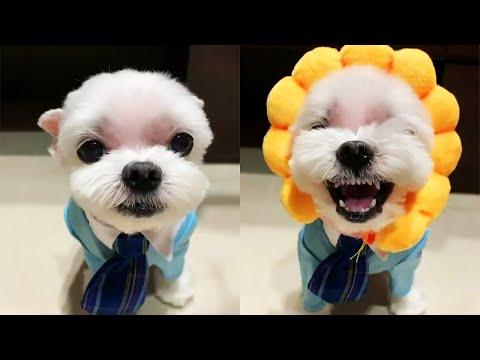 Aww !! Cutest Small Dog - Cute and Funny Pets Video Compilation
