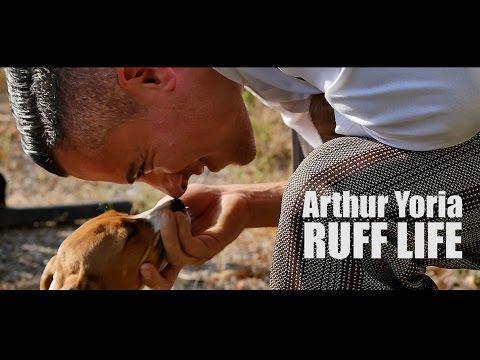 Musician Rescues Puppy - Ruff Life By Arthur Yoria