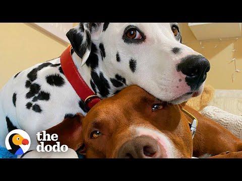 Dog BFFs Get Their Parents To Start Dating #Video