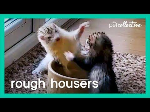 Rough Housers