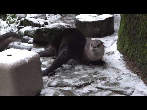 First Snow Day for the Otter Pups