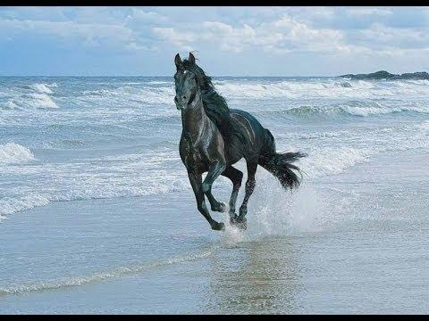 Top 10 Most Beautiful Horse Breeds -- Just For You