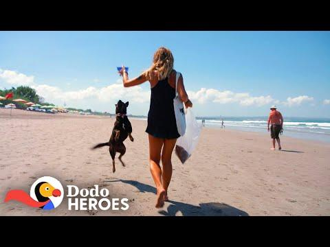 Woman Devotes Her Life To The Stray Dogs Of Bali Video