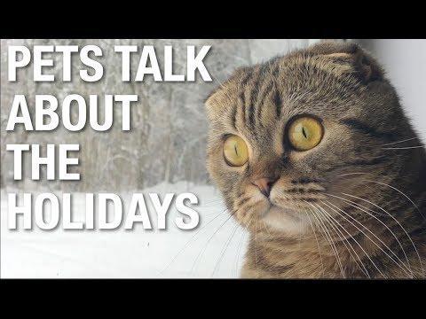 Adult Content - PetsTalk Holidays