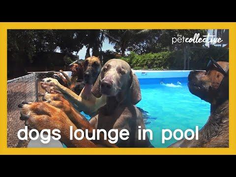 Dogs Lounge in Pool Video