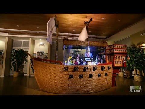 Pirate Fish Tank