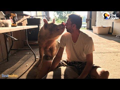 Guy And His Pig Have The Sweetest Bond | The Dodo Soulmates