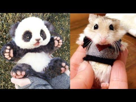 Cutest Baby Animals Videos Compilation Cute Moment of the Animals - Animals #5