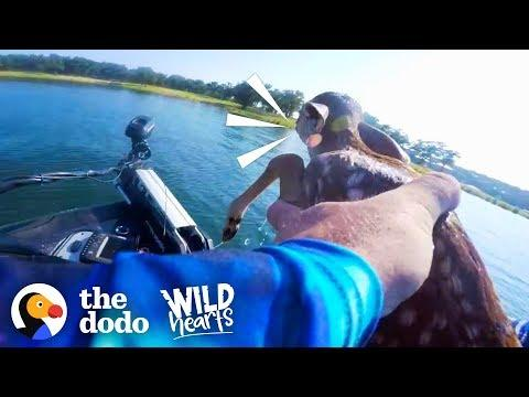 Guy Rescues Baby Deer From the Middle of a Lake