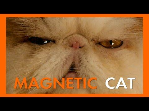 Super Epic Cats: Magnetic Cat