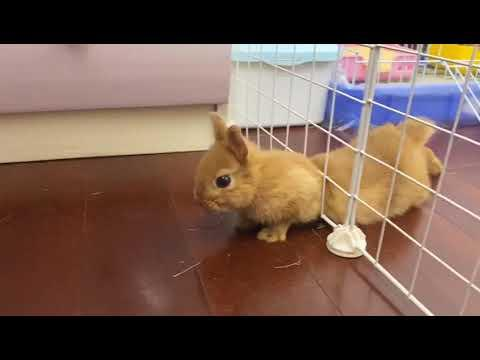 Watch This Rabbit Escape Prison Video