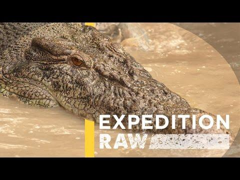 Video From Inside A Crocodile's Mouth (Exclusive)
