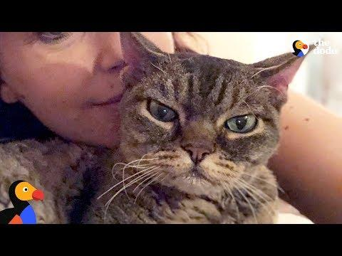 Aggressive Cat Shocks Mom By Becoming A Snugglebug - BARBARA