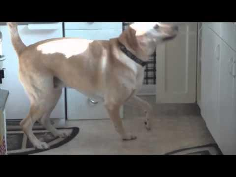 Well Trained Dog Makes His Own Treat