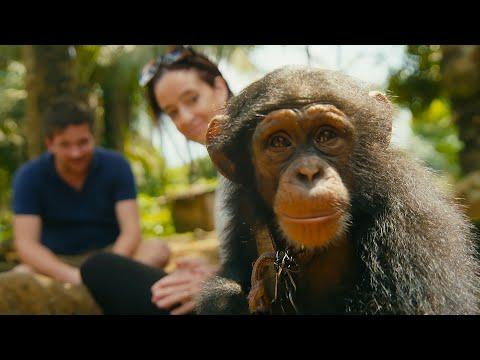 Undercover Team Rescue a Baby Chimp From The Pet Trade | BBC Earth