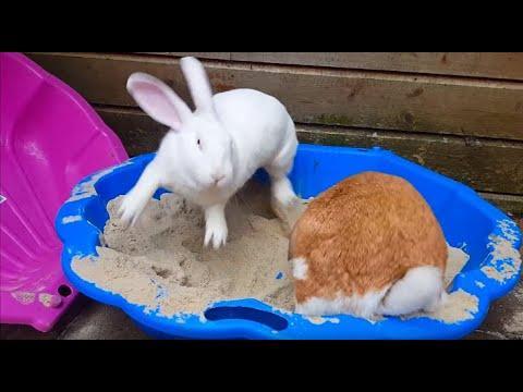 Bunnies Playing In A SandBox Video