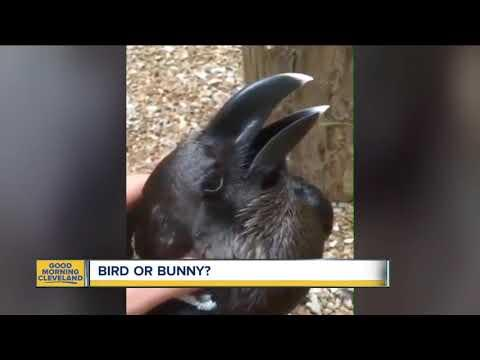 What do you think...bird or bunny?