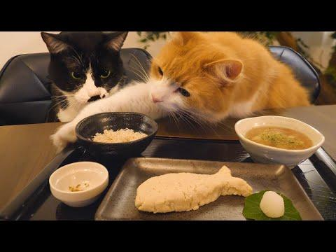Japanese Meal For Cats. JunsKitchen.