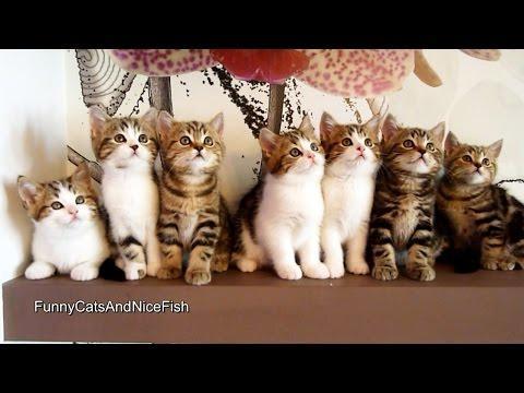 Epic Dance Battle Of Kittens