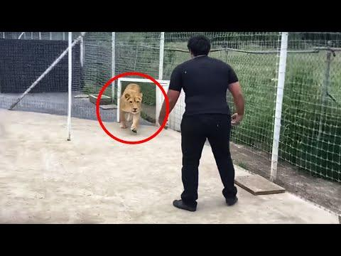 This Lion Has Spent 7 Years Without Seeing Its Master… Look What Happened