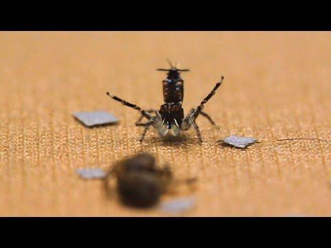 Shake Your Silk-Maker: The Dance Of The Peacock Spider