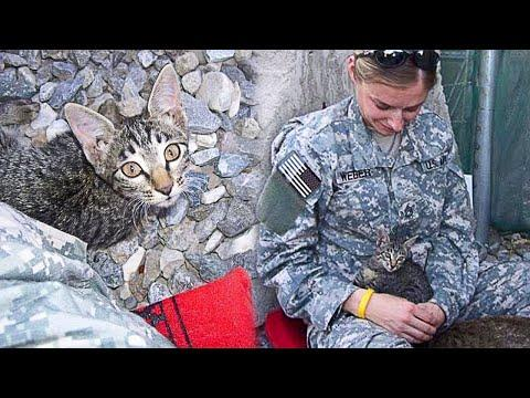 Soldier Saved Stray Kitten's Life - Now She Has A Loving Family! #Video
