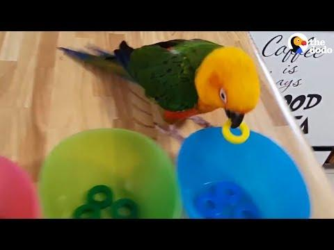 Smart Parrot Shows Off All His Tricks