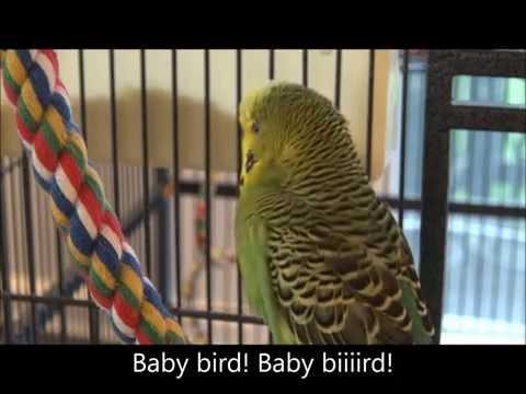 Hello! Are You A Pretty Bird!