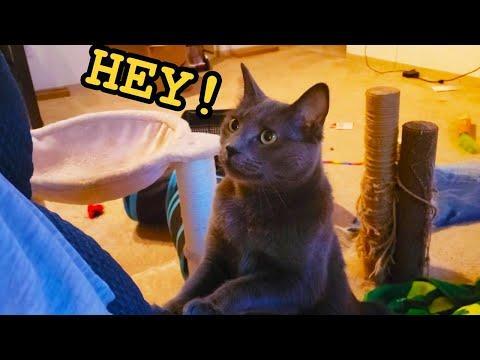 Cats Demanding Attention Video (2020)