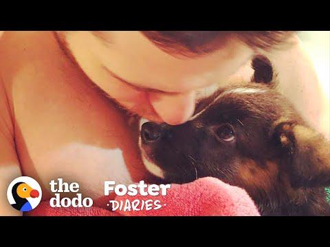 Family Fosters A Pair Of Puppies — And The Dad Falls In Love | The Dodo Foster Diaries