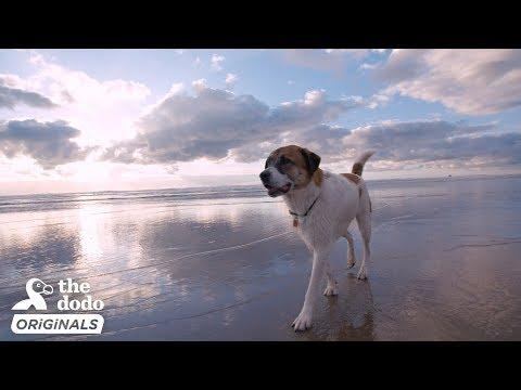 Rescue Dog And His Family Go On A Road Trip To The Ocean