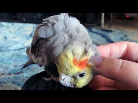 My Little Baby Dinosaur Video