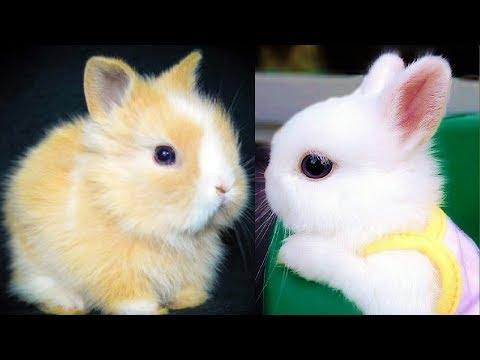 RABBITS – Cute Baby Bunnies – Funny Rabbit Videos – Funny Baby Videos